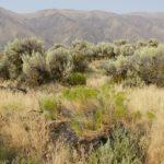 High desert sagebrush in Moses Lake area