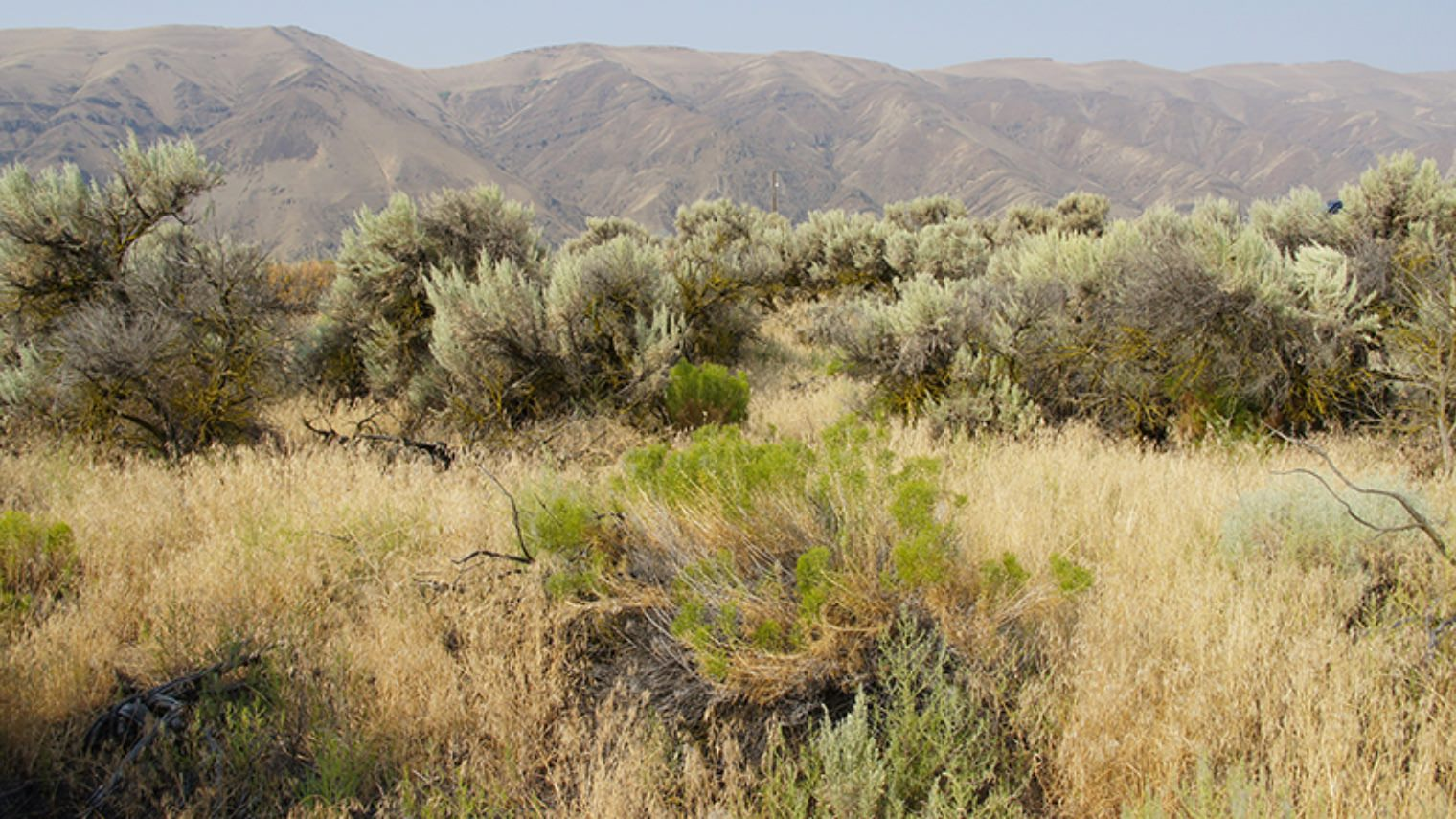 High desert sagebrush in Moses Lake area